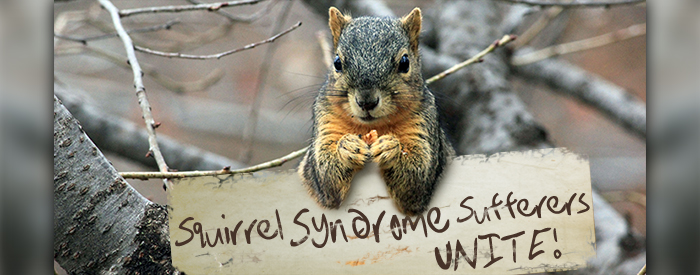 Squirrel Syndrome Sufferers Unite!